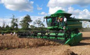 Santa Cruz perdería 319 mil toneladas de soya por sequía