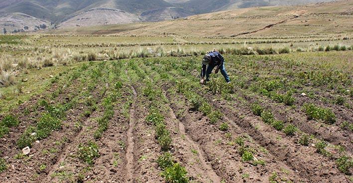 Bolivia compra cada vez más alimentos de los países vecinos