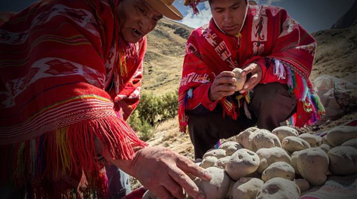 El Chuño, el secreto milenario de los Andes para lograr que una papa dure 20 años