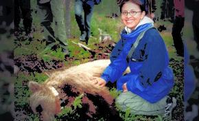 En Sudamérica: Un tercio de los osos andinos puede desaparecer en 30 años