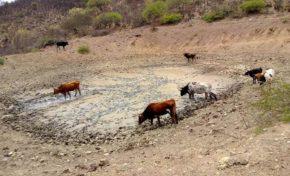 Pasorapa, cuatro años seguidos de sequía