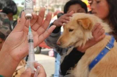 Anuncian vacunación antirrábica de emergencia para noviembre en Oruro