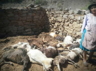 Camargo registra pérdidas en la producción agrícola y muerte de animales por la granizada