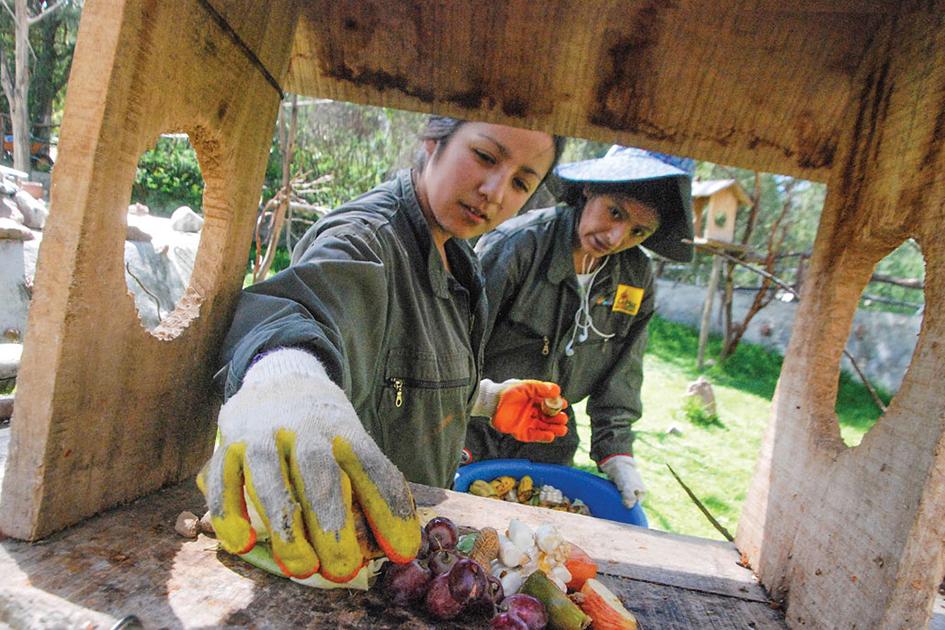 Voluntarios del zoo Vesty Pakos preparan comidas, jugos y juegos para los animales