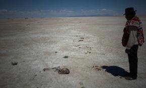 "En Oruro: Pesqueros señalan que no se hizo nada para salvar al ""Poopó"""