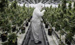 En Perú aprueban el uso medicinal de la marihuana