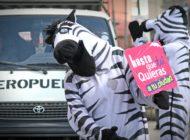 En su cumpleaños 16, las Cebras de La Paz y de otras dos ciudades se reúnen para compartir experiencias