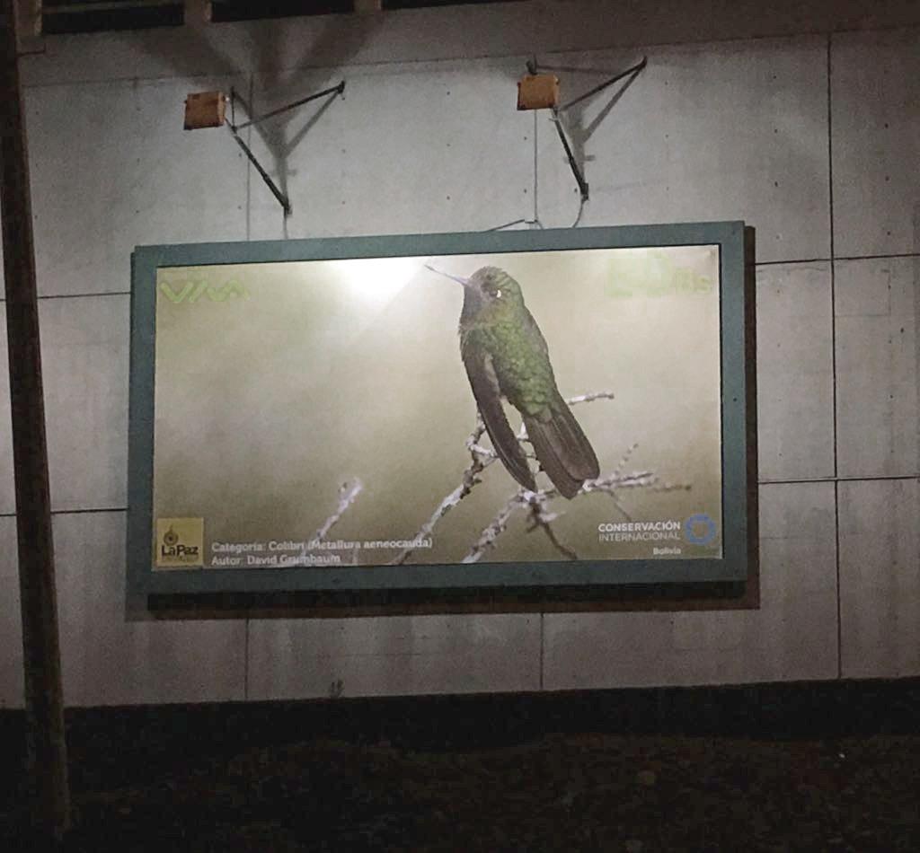 Galería al Aire Libre expone fotografías de especies en peligro de extinción