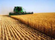 Gobierno  evaluará daños a la producción de soya tras la intensa lluvia en Santa Cruz