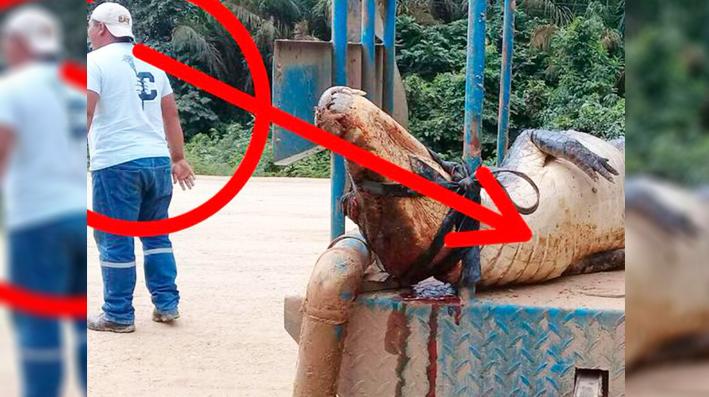 Empresa china extermina fauna en Bolivia