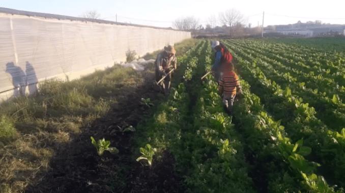 Niños bolivianos eran explotados laboralmente y reducidos a servidumbre en Argentina