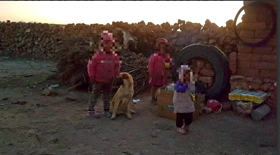 Niña de cuatro años cuida mas de 400 llamas en el área dispersa de Uyuni